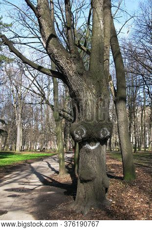 Strange Twisted Tree Trunk In The Park With Eyes Painted On It And A Smile, Funny Emoticon