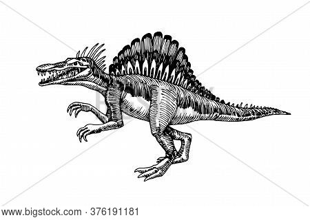 Prehistoric Reptile Of The Jurassic Period, Giant Carnivorous Dinosaur Spinosaurus, Raptor, Vector I