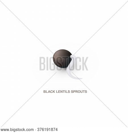 Realistic Black Lentils Sprout For Healthy Eating. Vector Illustration.