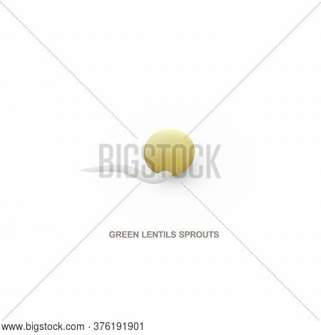 Realistic Green Lentils Sprout For Healthy Eating. Vector Illustration.