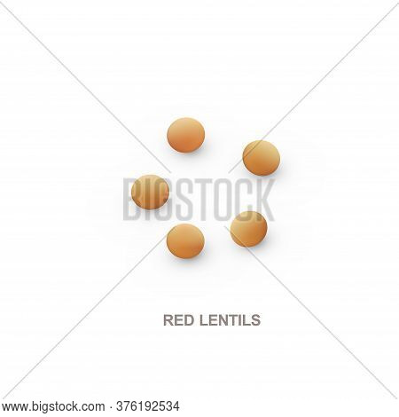 Realistic Red Lentils For Healthy Eating. Vector Illustration.