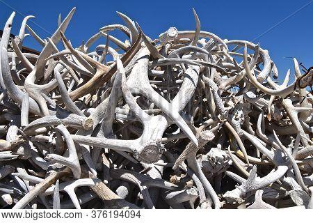 Huge Pile Of Deer Of Lek Antlers For Sale At A Market