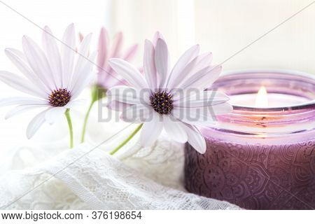 Purple White Daisies And Purple Candle On Dreamy Background.  Still Life For Mothers Day And Valenti