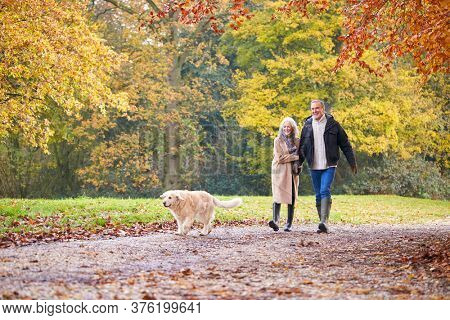Loving Senior Couple Walking With Pet Golden Retriever Dog Along Autumn Woodland Path Through Trees