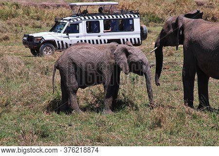 Serengeti / Tanzania - 05 Jan 2017: Elephant On Safari In Kenia And Tanzania, Africa