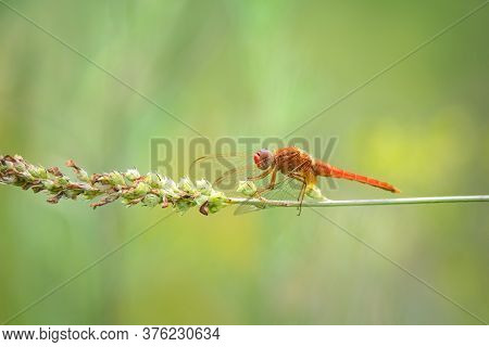 Close Up Of Red Dragonfly Sitting On Green Grass