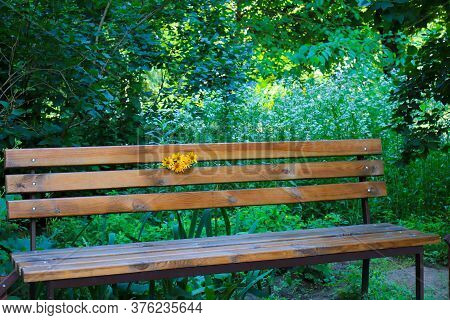 An Brown Wooden Vintage Bench With Yellow Daisies Stands In A Park On A Background Of Green Trees. B