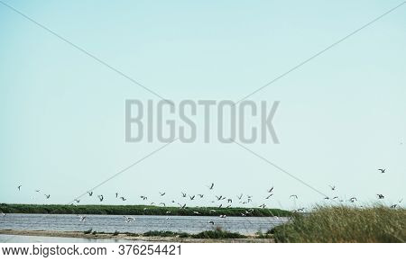 calm sea bay with flying gulls