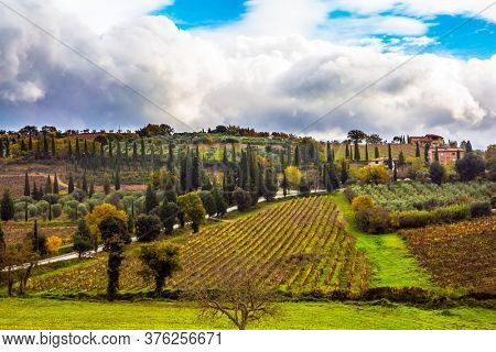 Olive trees on green grassy meadows. Rural tourism. Tuscany Farm. Neat smooth rows of vineyards on gentle hills. The concept of active, rural and photo tourism