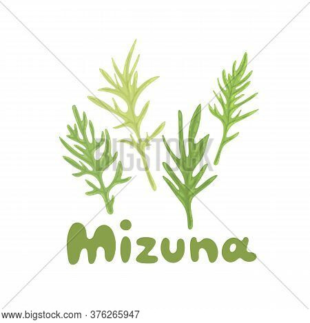 Mizuna. Japanese Greens Or Spider Mustard. Cultivated Crop Plant. Clipart With A Hand-drawn Title. K
