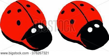 Close Up Red Ladybug On White Background