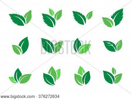 Vector Leaf For Nature, Leaf Icon Eps, Leaf Icon, Vector Leaf, Leaf Logo, Logo Leaf, Leaf Pack, Icon