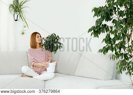 Ficus Flower In The Hands Of A Girl. Green Leaves