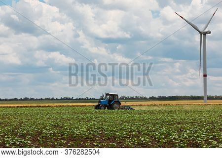 Modern Tractor Cultivating Field Of Ripening Sunflowers. Agricultural Industry
