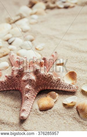 Seashell And Various Types Of Seashells On The Beach Sand. Summer Photo.