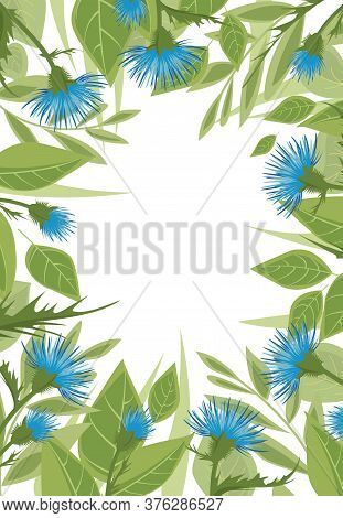 Vector Illustration Thistle With Green Leaves On A White Background