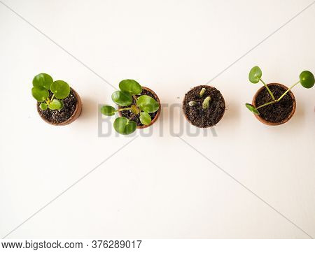 Propagating Succulents In Small Terracotta Pots On A White Background