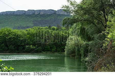 Summer Landscape With A Lake And A Willow Tree. A Weeping Willow Leaned Over The River. Summer Natur