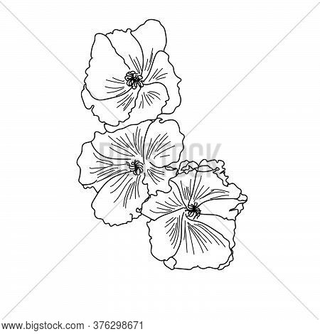 Outline Flower Mallow, Three Hand Draw Vector Flowers, Herbal Elements For Design And Creativity