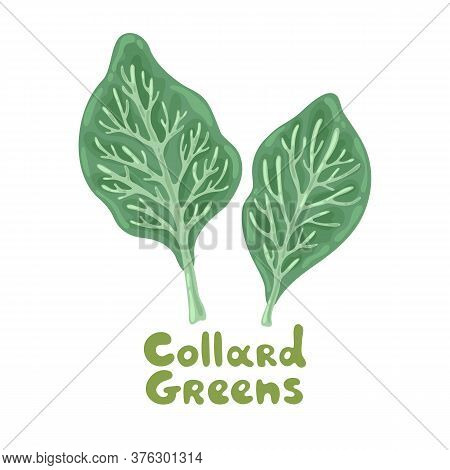 Collard Greens Leaves On A White. Salad Icon. Lifestyle Concept, Culinary Herb. Flat Vector Design F