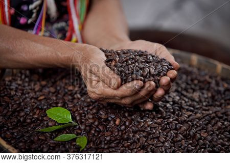 Arabica Coffee Beans On Hand, Roasted In The Middle