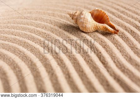 Seashell On The Yellow Sand On A Sunny Day. Natural Background With Place For Your Text.