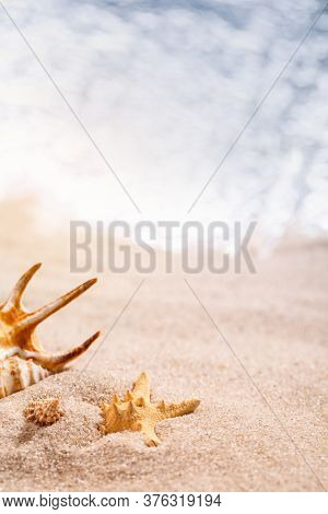 Beautiful Seashells Lie In The Sand On A Sunny Beach. Blurred Sea In The Background. Place For Text,