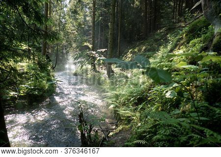 Misty Morning On A Forest Creek