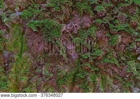Moss Wall Closeup Of Road Carved In The Rock Near Pico Del Ingles, Anaga, Tenerife, Spain