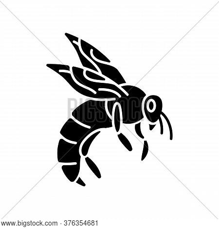 Bee Black Glyph Icon. Small Flying Insect With Sting. Beekeeping, Apiculture Silhouette Symbol On Wh