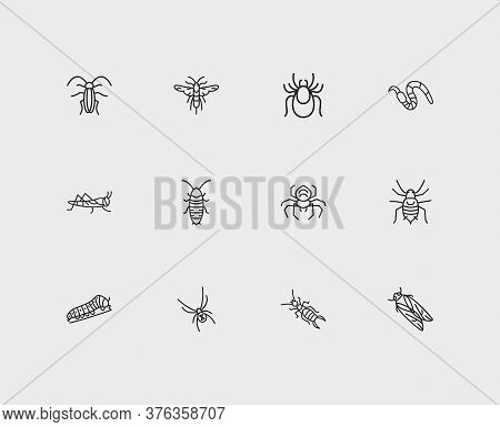 Insect Icons Set. Earwig And Insect Icons With Black Widow Spider, Cicada And Hissing Cockroach. Set