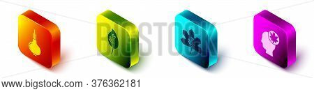 Set Isometric Onion, Leaf Or Leaves, Leaf Or Leaves And Human Head With Leaf Icon. Vector