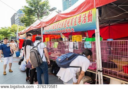 Taipei, Taiwan - May 12th, 2019:animal adoption organization with cats and dogs at street in Taipei, Taiwan, Asia