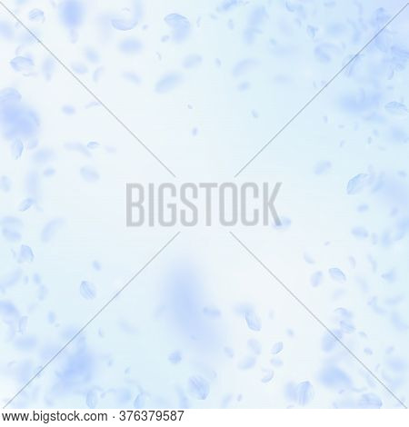 Light Blue Flower Petals Falling Down. Extra Romantic Flowers Vignette. Flying Petal On Blue Sky Squ