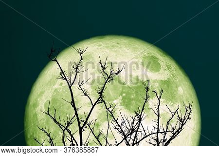 Super Green Sturgeon Moon And Silhouette Tree In The Night Sky