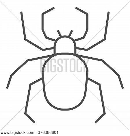 Spider Thin Line Icon, Insects Concept, Scary Arachnid Insect Sign On White Background, Spider Silho