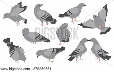 Cartoon Pigeons Flat Icon Set. Cute Flock Of City Gray Doves Flying, Standing, Sleeping, Pecking Vec