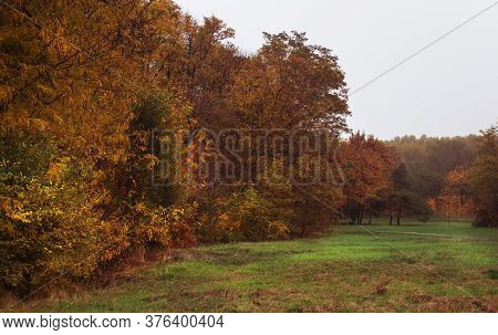 Autumn Red-yellow Landscape, Sunny Day In The Grove, Selective Focus