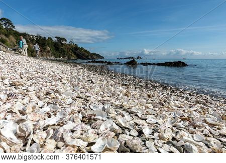 Cancale, France - September 15, 2018: Thousands Of Empty Shells Of Eaten Oysters Discarded On Sea Fl