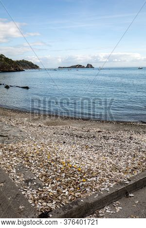 Thousands Of Empty Shells Of Eaten Oysters Discarded On Sea Floor In Cancale, Famous For Oyster Farm