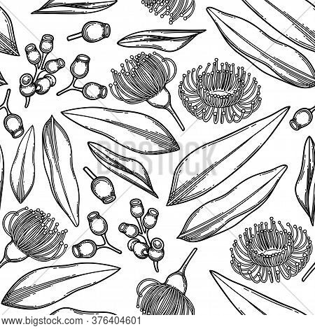 Seamless Pattern Of Graphic Eucalyptus Flowers And Leaves.
