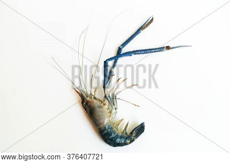 The 1 Big Prawn Long Muscle Laid On A White Background, Prawn Or Tiger Shrimp Isolated On White Back
