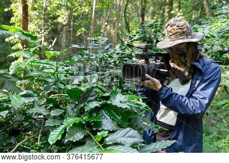 Cameraman Reporter Working And Set Recording Digital Video Camera To Shooting Arabica Coffee Trees P
