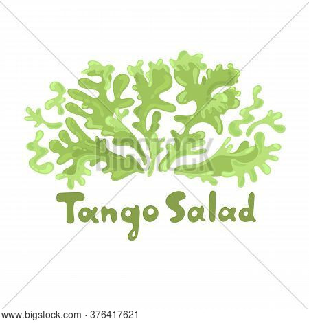 Tango Salad. Leafy Greens Vegetables. Botanical Flat Cute Icon. Hand-drawn Popular Types Of Salad. G
