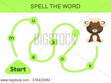 Maze For Kids. Spelling Word Game Template. Learn To Read Word Musk Ox, Printable Worksheet. Activit