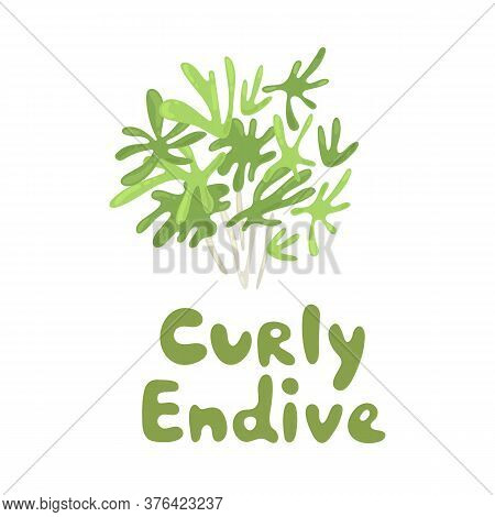 Cichorium Endivia Salad. Curly Endive Cute Stock Illustration. Agriculture, Gastronomy, Cooking Conc