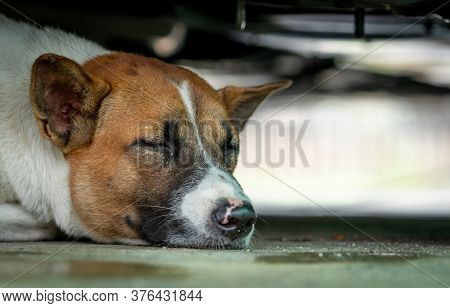 Dog Sleeping On Floor Under The Car. Cute Animal. Closeup Face Of Sleeping Dog. Tired Dog Take A Nap