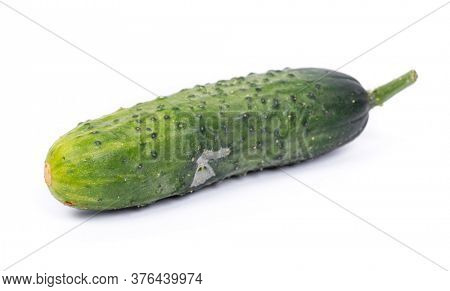 One defective spoiled cucumber isolated on white background