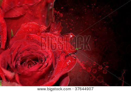 Red Roses- Background