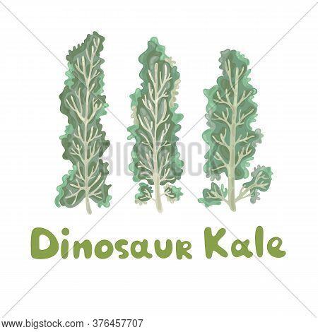 Dinosaur Kale. Healthy Vector Colorful Food Vegetable Ingredient. Kale On White Background. Elegant